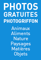 section photos gratuites