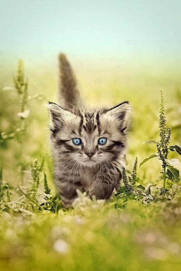 Image Chat Mignon index of /photos-du-monde/best-photo-cat-funny-ugly-big-little-tiny