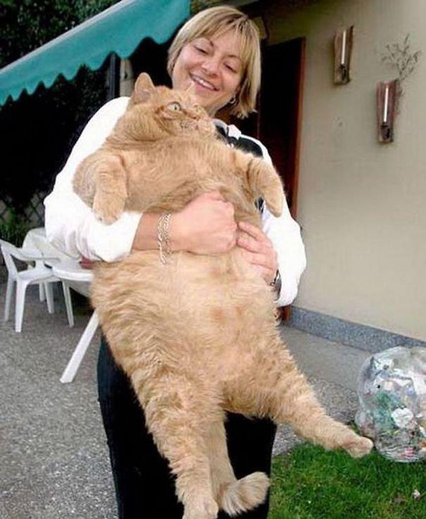 Gros Chat Du Monde index of /photos-du-monde/best-photo-cat-funny-ugly-big-little-tiny