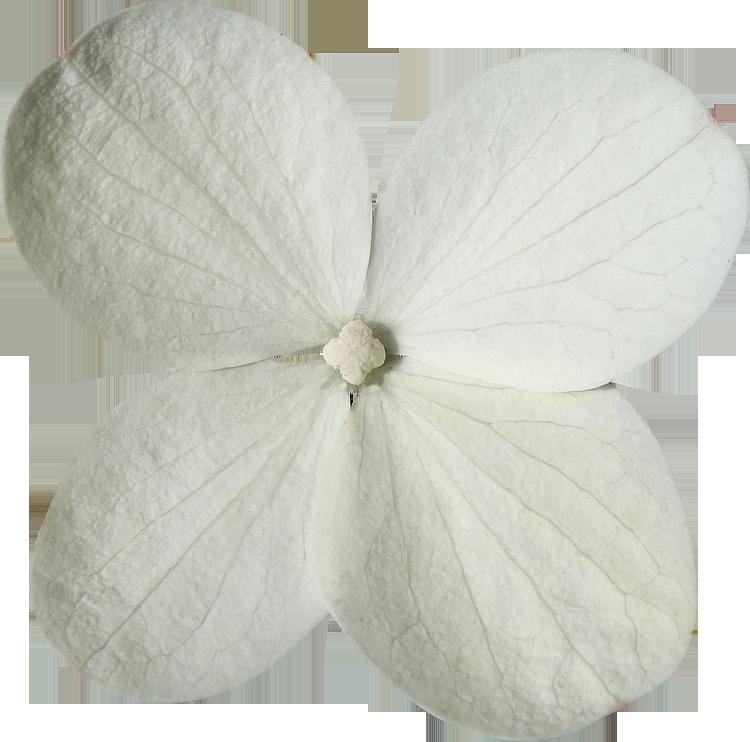 Super Photos de Fleurs détourées au format PNG Libres de Droits  ND17
