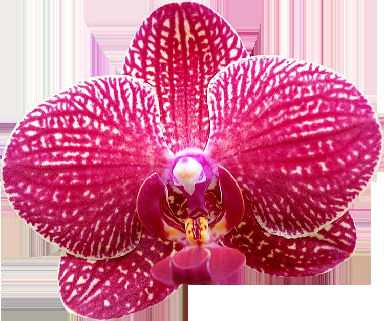 Top Photos de Fleurs détourées au format PNG Libres de Droits  SM37