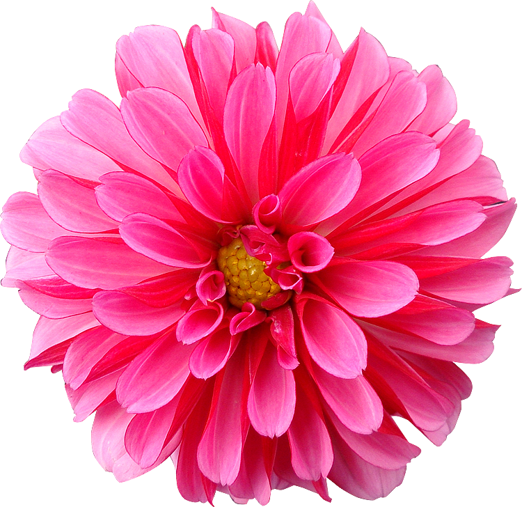 Index of photos du mondefleurs png detourees gratuites free 300dpi fleur detouree photo thecheapjerseys Image collections