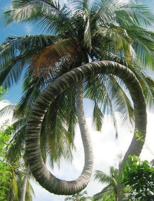 """Résultat de recherche d'images pour """"les beaux arbres du monde"""""""