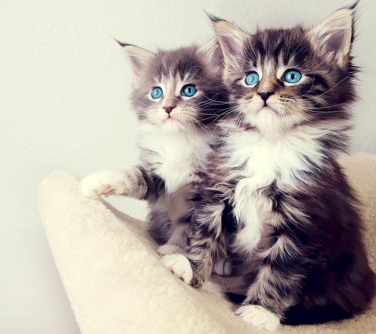Best photo cat funny ugly big little tiny chat moche laid mignon petit gros - Photo chat mignon ...